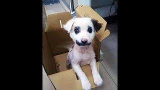 Он думал что принес домой щенка, но оказалось что это что-то другое