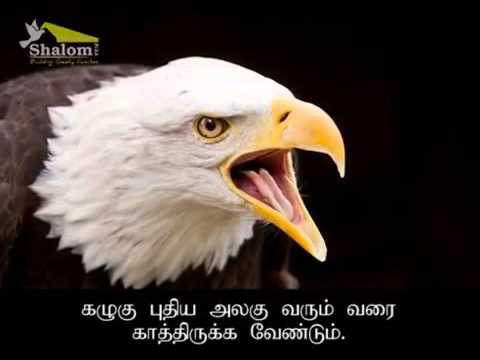 Eagle story in  Tamil, motivation video