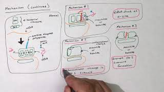 Bacteriocidal