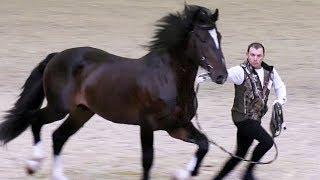 Конь Огонь и другие #АтлантыКонногоМира Ринг лошадей тяжеловозных пород #ИППОсфера 2018 #HIPPOsphere
