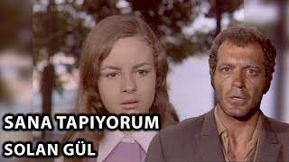 Ayşecik Sana Tapıyorum: Solan Gül (1971) - Zeynep Değirmencioğlu & Fikret Hakan