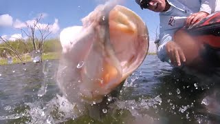 Best Flipping & Pitching for Giant Bass Fishing made EASY!