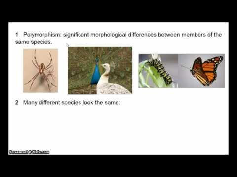 Philosophy of Biology - The Species Problem 1