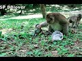 Alpha Fighting Small Baby Monkey She Scare Not Cry Loud