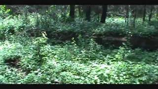 Dawson forest (Ga area 51) part 1
