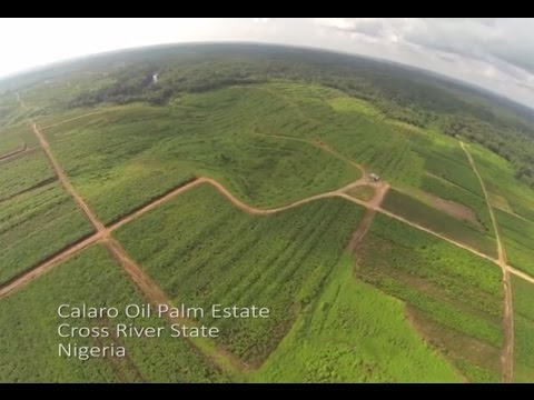 Drone in Nigeria Oil Palm Estate