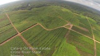 Drone in Nigeria Oil Palm Estate