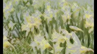 Wordsworth The Daffodils  Chopin Janette Miller/Heffernan Thumbnail