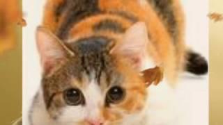 Кленовница. Коты воители. У кошки 9 жизней