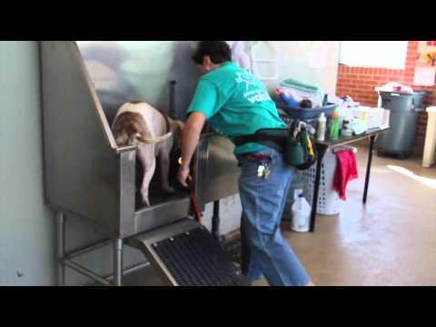 Proposition 415: Pima Animal Health Care Center
