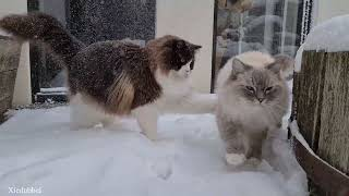 These Cats Are Having Fun In Any Type Of Weather (Snow, Rain, Autumn Leaves, Hot Weather)