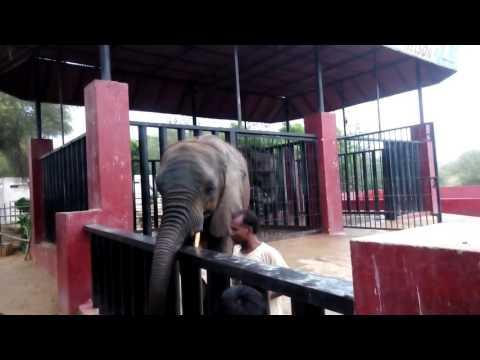 Elephant Video at Safari Park, Karachi