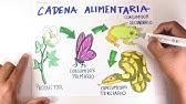 Cómo Dibujar Paso A Paso La Cadena Alimenticia Con Colores