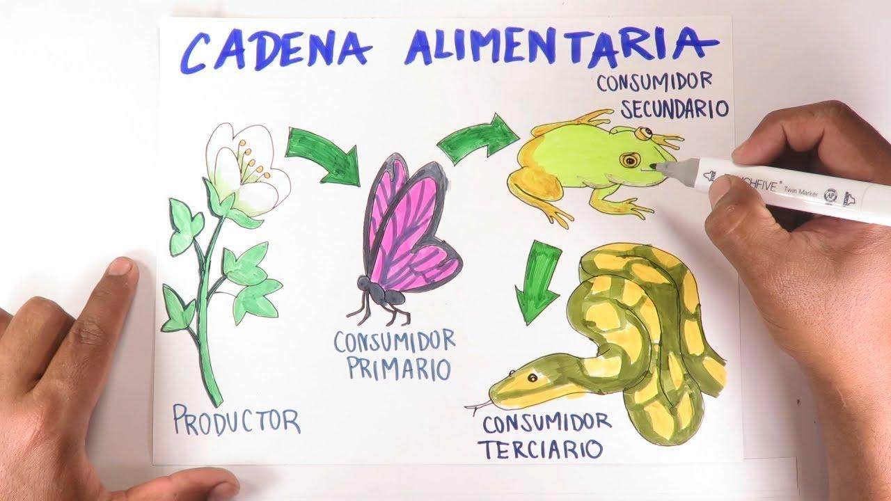 Aprende A Dibujar Una Cadena Trófica Alimentaria Paso A Paso Youtube