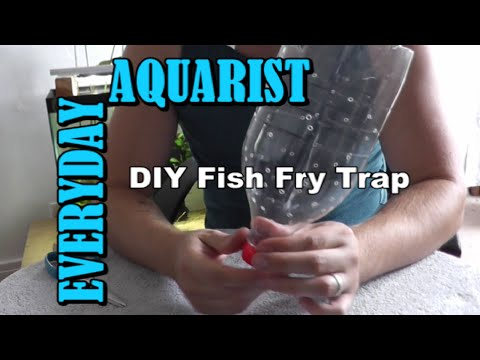 How To Make DIY Fish Fry Trap Molly, Guppy, Platy