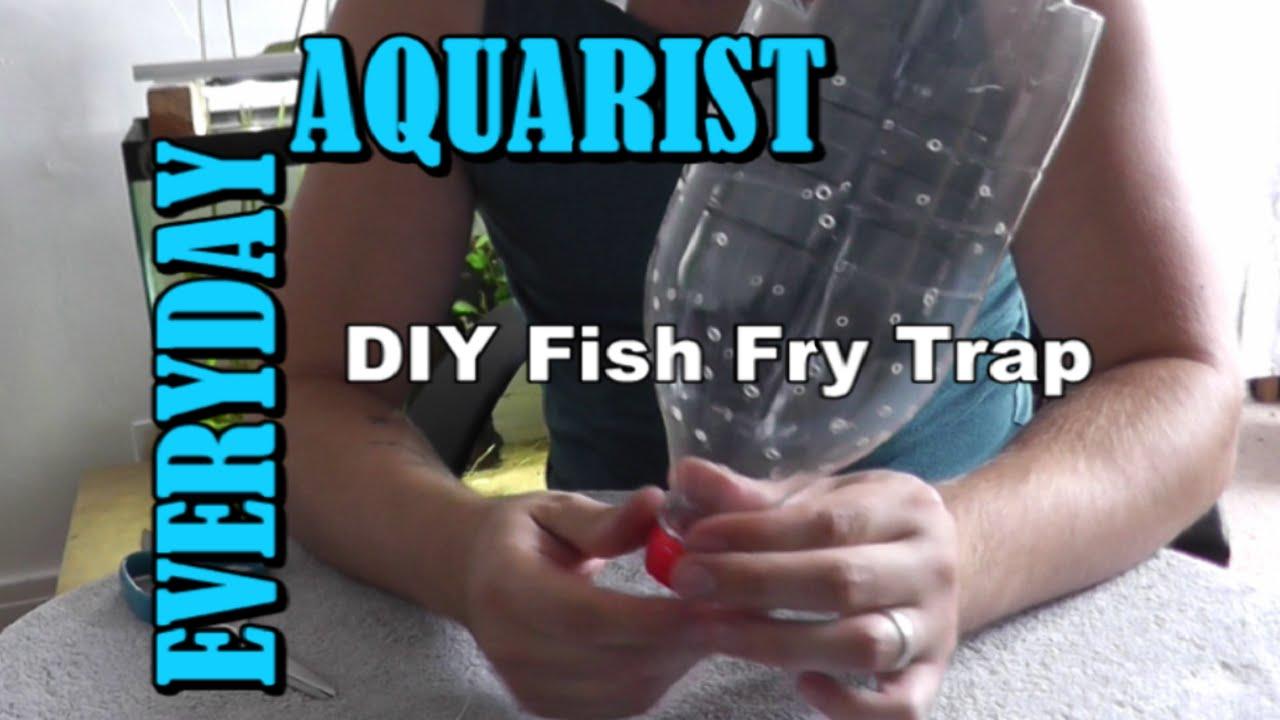 Homemade Breeding Video