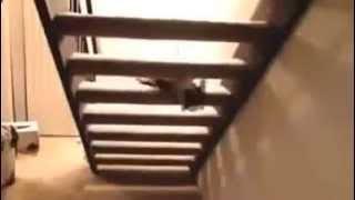 Смешные кошки видео - смотрите онлайн!(Смешные кошки видео - смотрите онлайн! По сведениям Лионского университета (это Франция) в мире приблизител..., 2014-10-03T06:19:07.000Z)