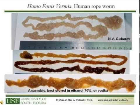 First conference presentation rope worms. Funis Vermis ...
