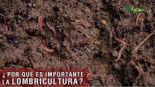 Por qué es importante la lombricultura  TvAgro por Juan Gonzalo Angel Restrepo
