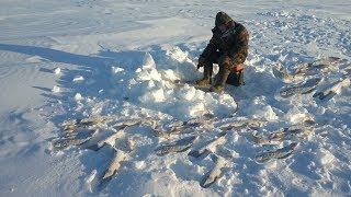 Ловим горбачей в глухозимье! Якутия Yakutia