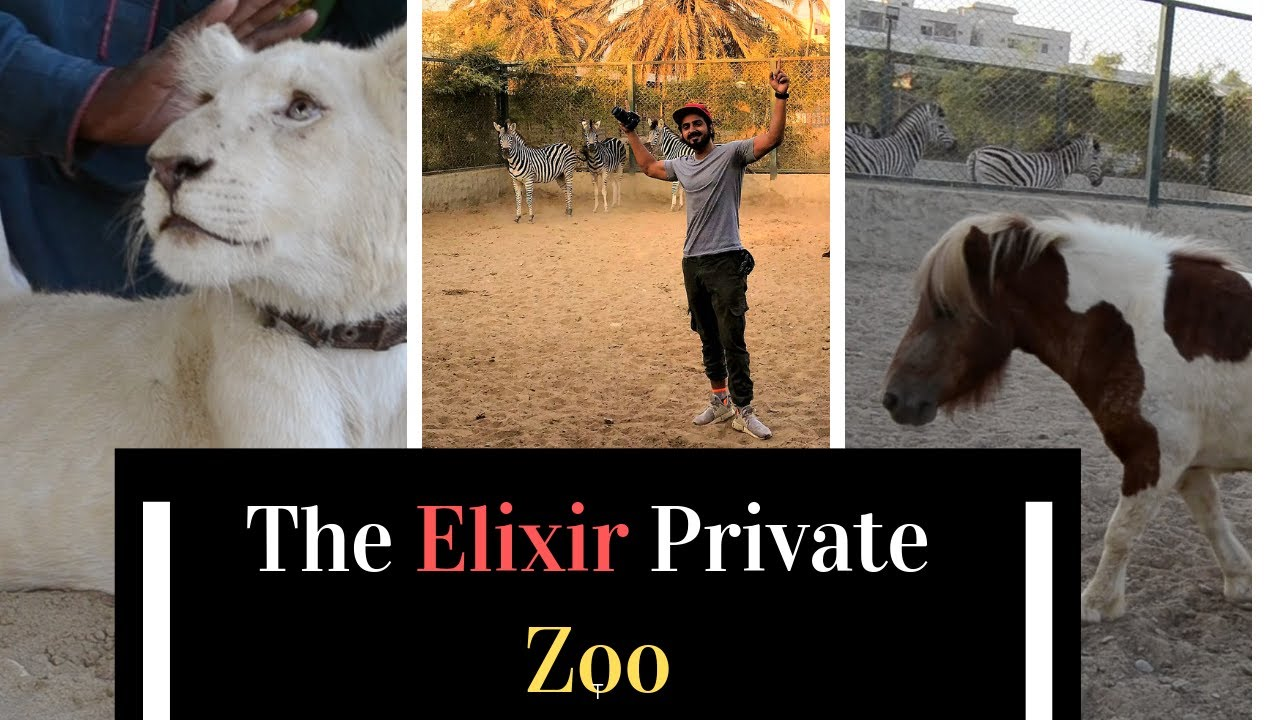 1000 plus animals in The Elixir Private Zoo with Paracha House