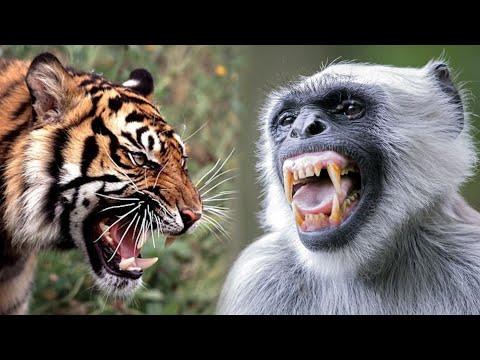 Understanding Alarm Calls to find a Tiger in Wildlife Safari