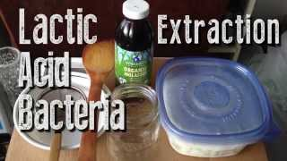 Natural Farming - Lactic Acid Bacteria (LAB) Extraction