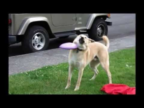 hqdefault in loving memory of frisbee doge youtube