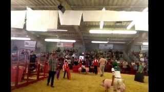 """ag Time"" W/ Avila Ventura County Fair Ffa Champ / Reserve Grand Champion Swine Show S1e50"