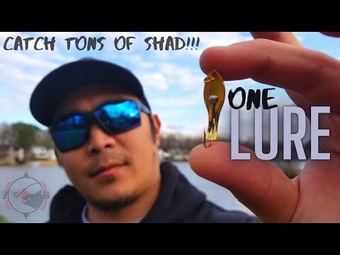 HOW TO : SHAD Fishing Made EASY!! (SIMPLEST RIG EVER!!)