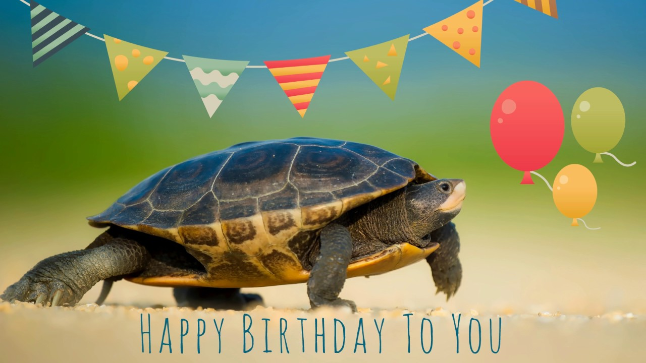 turtle birthday Happy Birthday Turtle   YouTube turtle birthday