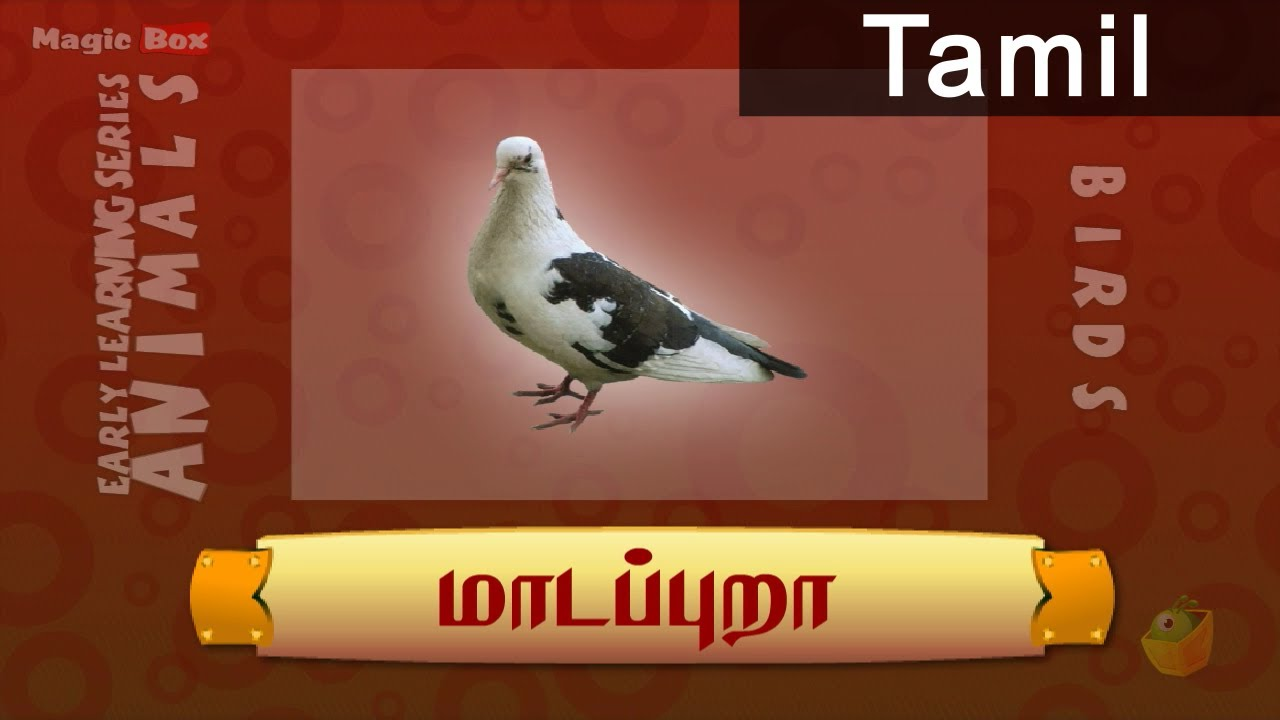 Birds Pictures With Names And Information In Tamil | Imaganationface org