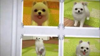Holly The Pomeranian's  Pictures