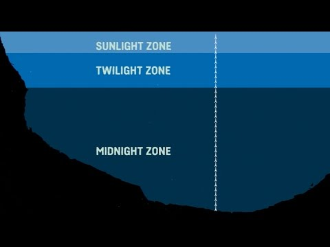 What Are The Sea Zones? Explaining Deep Sea Exploration - Behind The News