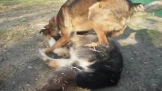 Кастрированные собаки не подвержены апатии, если их любят