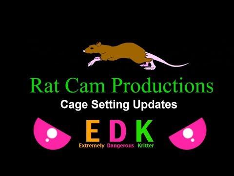 Rat Cam 112 - New Cage Setting Update