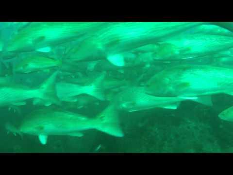 1000's Red Fish St Andrew park underwater