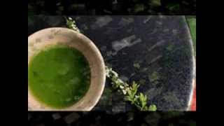 Green Tea From Japan | Japanese Green Tea | Organic Green Tea