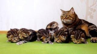 3 week old kittens learns how to walk. 5 min Bonus video . Cutest Cat Moments