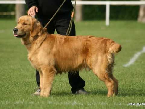 Golden Retriever 2 Months Weight Germain & Octav...