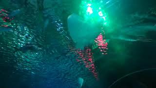 Документальный фильм о морских животных 3