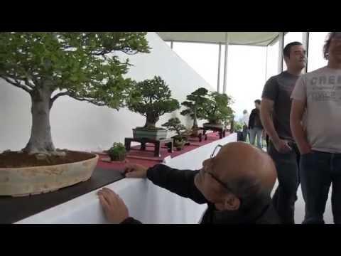 (HD173) BCSR 2013 visite de l'exposition de bonsaï avec Takeo KAWABE