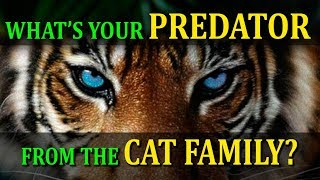 WHAT'S YOUR PREDATOR FROM THE CAT FAMILY? PERSONALITY TEST!