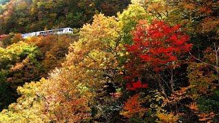 JR木次線 奥出雲おろち号 (1-Nov-2020) 色織りなす神話の嶺