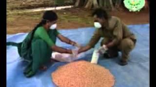 Verusanaga Vittanashuddhi, Groundnut Seed Treatment 1