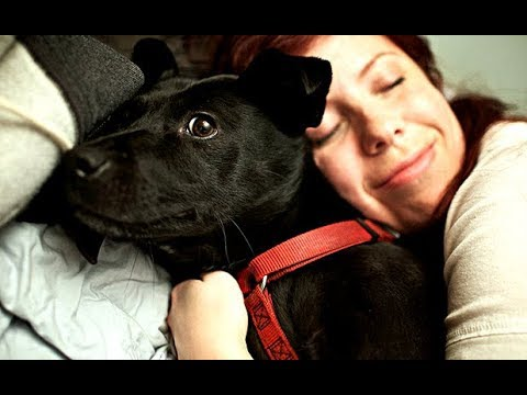 Top 10 Most Loving Dog Breeds