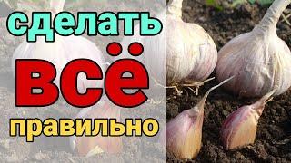 Как правильно подготовить грядку для посадки озимого лука и чеснока. Все секреты выращивания озимых