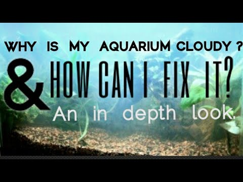 Why Is My Aquarium Cloudy? The Real Reason Your Fishtank Water Looks Foggy & How To Fix, Or Stop It
