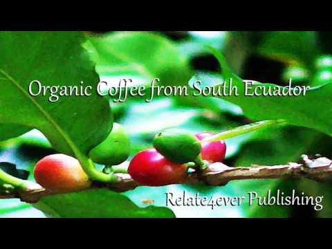 Organic Coffee from South America