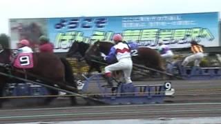 岩見沢競馬場のばんえい競馬、第2障害の近くから(2005年撮影)